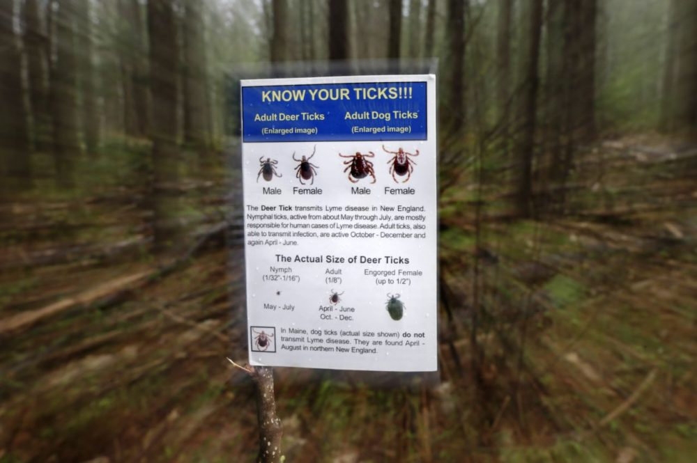 In this photo made Friday, May 9, 2014, an informational card about ticks distributed by the Maine Medical Center Research Institute is seen in the woods in Freeport, Maine. State officials say ticks are back with a vengeance, meaning tick-borne illnesses like Lyme disease will see no wain. No wane is expected in Lyme nationwide, either, in part because of climate change. (Robert F. Bukaty/AP)