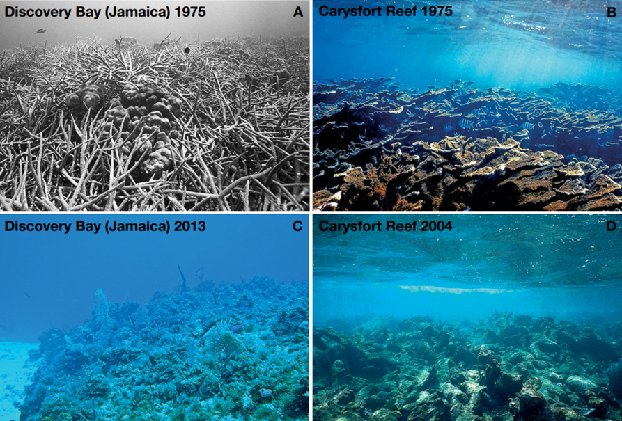 What would happen if the coral reefs disappeared?