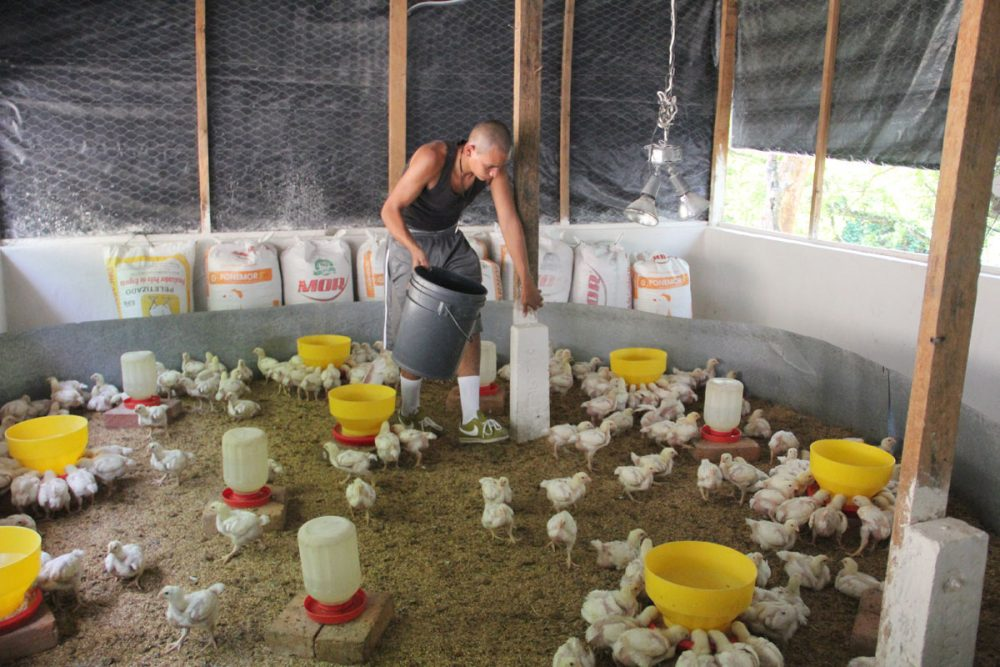One of Marvin Gonzalez's gang members feeds chickens on a farm in Ilopango. (Shannon Dooling/WBUR)