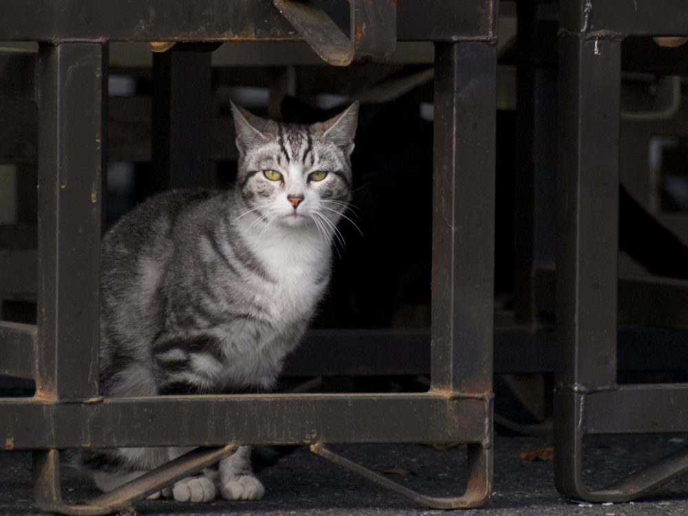 The Humane Society of the United States estimates that there are about 50 million feral cats in the U.S. (taylar/Flickr)