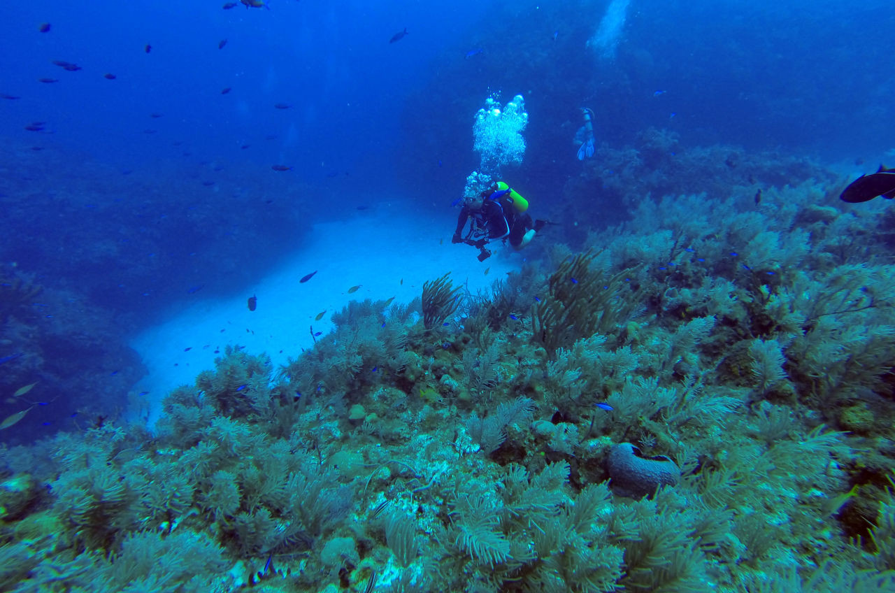 U.S. And Cuba To Collaborate On Marine Life Protection
