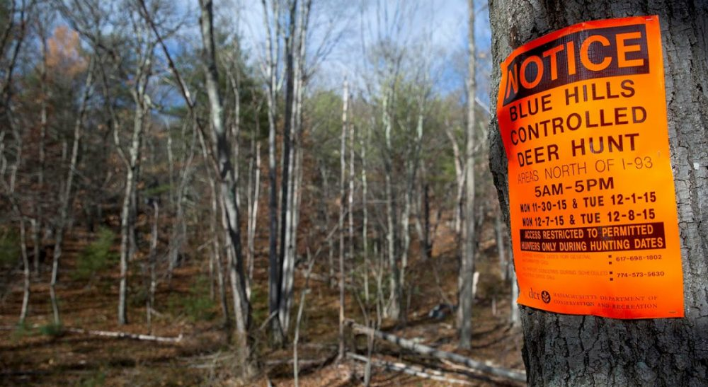 Signs posted on trees in the Blue Hills Reservation show the dates when only permitted hunters can enter the area. (Robin Lubbock/ WBUR)