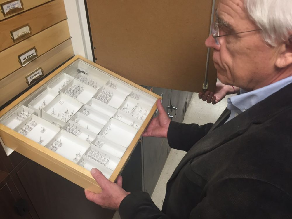 UNT Biology Professor James Kennedy shows a display case with the more than 50 types of mosquitoes that live in North Texas. (Lauren Silverman/KERA News)
