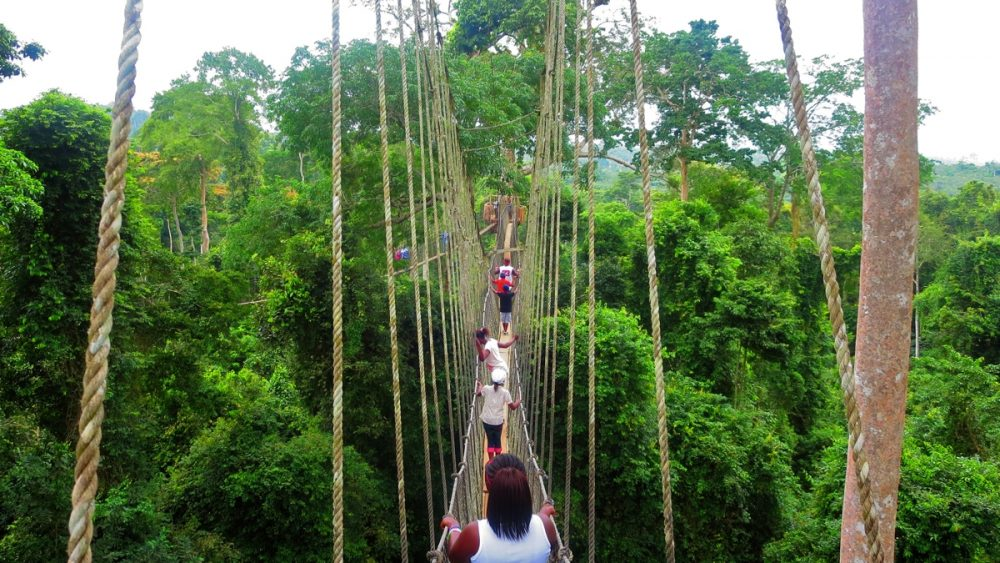 Lehigh University students take a canopy walk at Kakum National Park during the summer of 2015. (Courtesy Miles Davis)