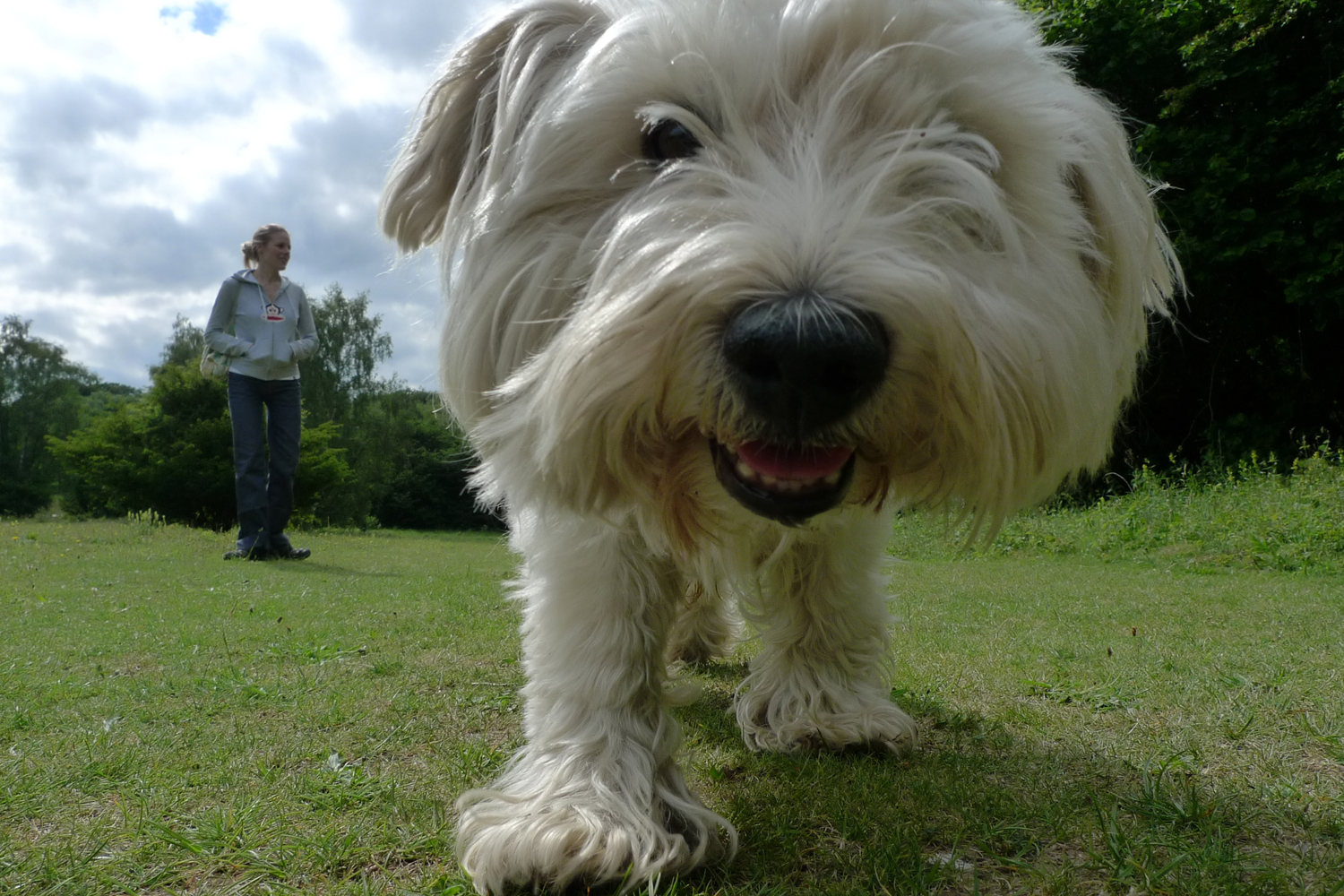 "A dog named ""JC"" smiles for the camera while his owner holds back. (Benjgibbs/Creative Commons)"