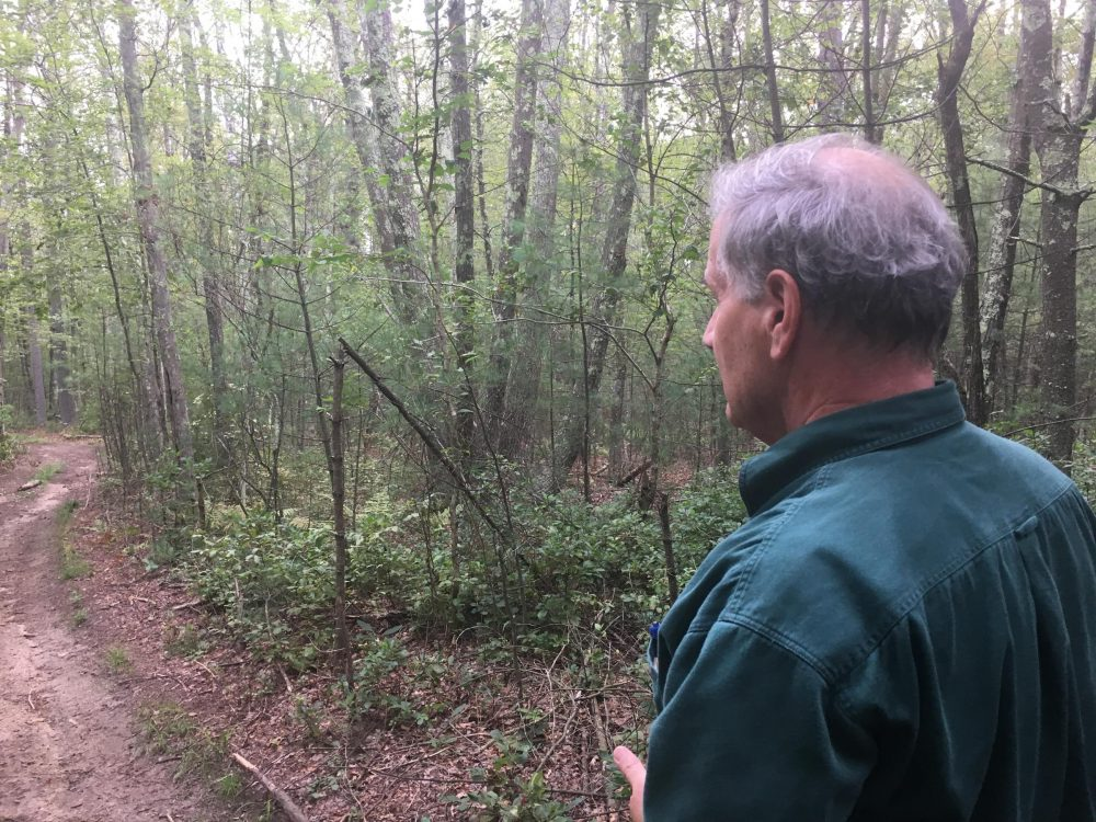Eccleston looks off into the trees that would have to be cleared to make way for the Clear River Energy Center. (Avory Brookins/RIPR)