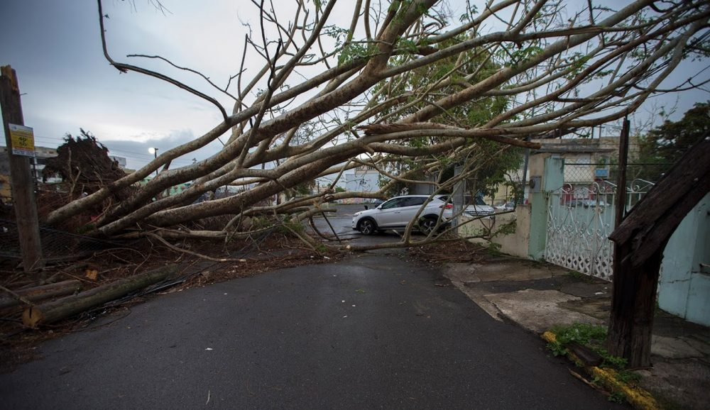 On October 9, trees were still down in downtown San Juan 20 days after the disaster. (Jesse Costa/WBUR)