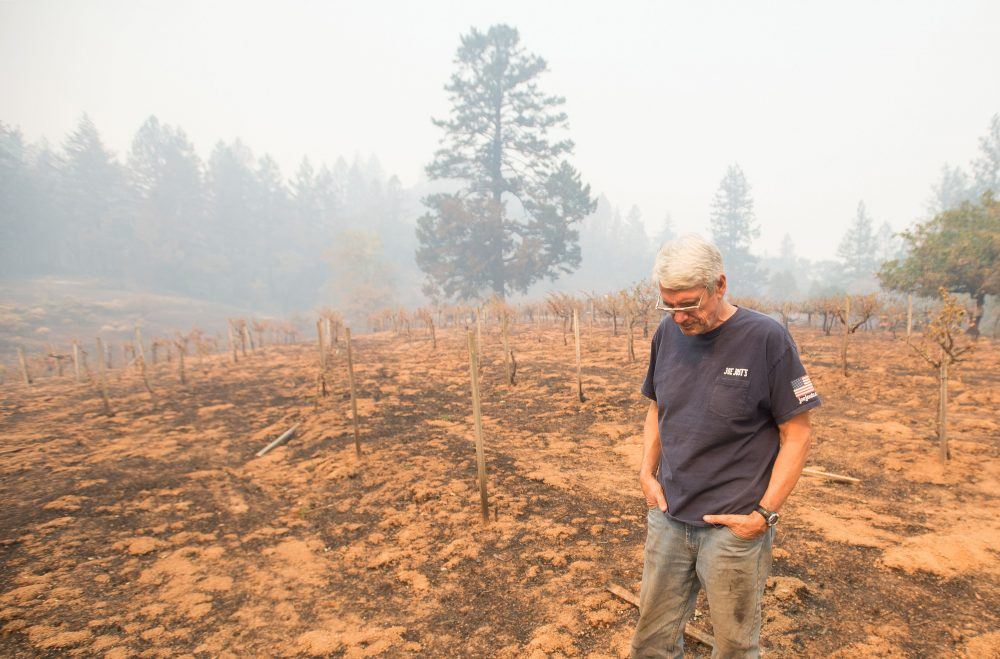 Property owner Chris Schrobilgen stands in his neighbor's burned grape vineyard in Calistoga, Calif., on Oct. 11, 2017. (Josh Edelson/AFP/Getty Images)