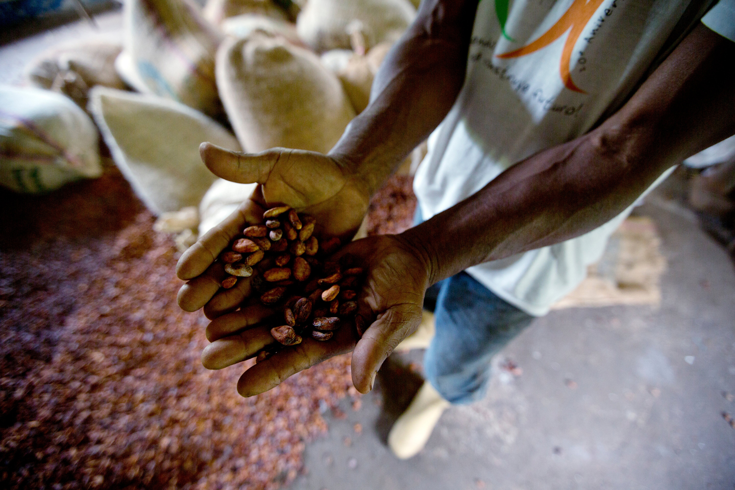 in this april 16 2015 photo a worker holds a handful of dry cacao