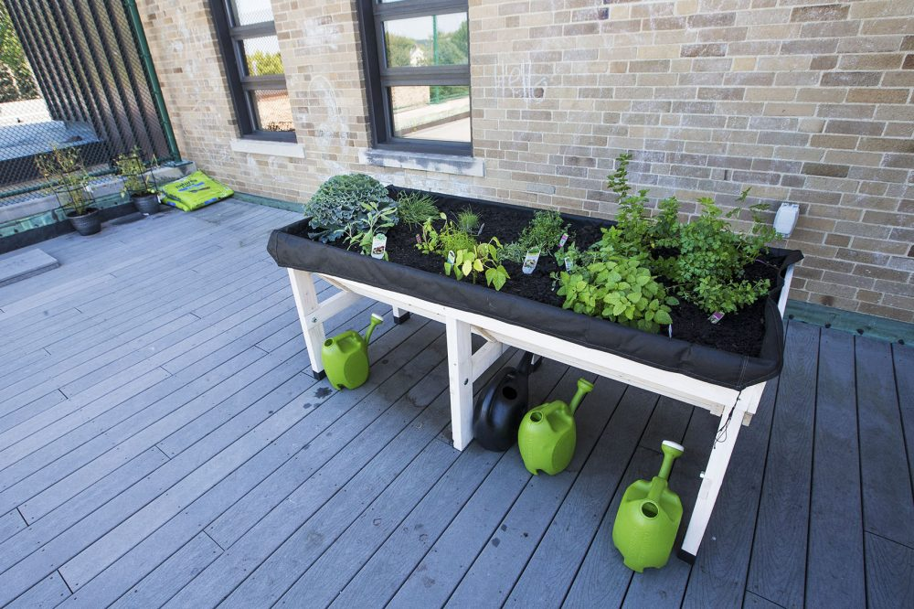 The garden and tomato pots (in the rear) on the rooftop of Franciscan Children's (Jesse Costa/WBUR)