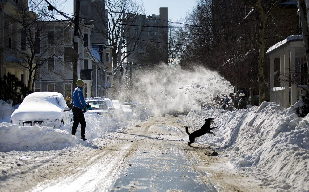 As Reed Alexander shovels his out his car on Banks Street in Cambridge, his dog Widget jumps into the snow he throws onto the snowbank across the street. (Jesse Costa/WBUR)