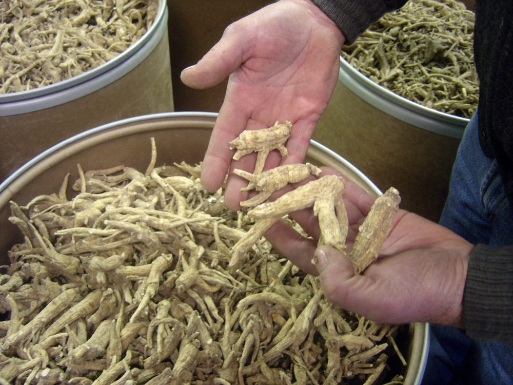 Wisconsin produces 90 percent of the nation's ginseng crop, most of which gets exported to China. Here, ginseng roots are seen at a ginseng-cleaning plant in Wausau, Wis. (Ramde Dinesh/AP)