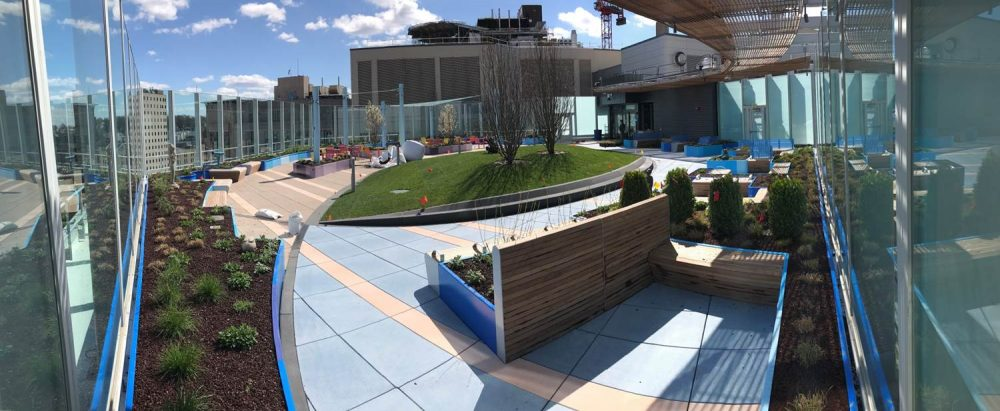 A small patch of greenery with a slight slope sits in the middle of the hospital's new rooftop garden. (Courtesy Boston Children's Hospital)