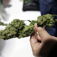A passerby examines a marijuana sample at the New England Cannabis Convention on March 25 in Boston. (Steven Senne/AP)