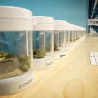 Marijuana samples at the Needham dispensary. (Robin Lubbock/WBUR)