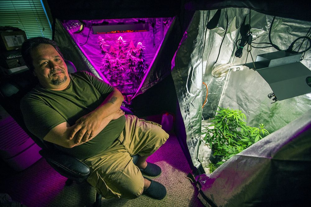 Peter Bernard, president of the Massachusetts Growers Advocacy Council, sits in his small grow room in his Taunton home, where he uses both LED and halide lights. (Jesse Costa/WBUR)