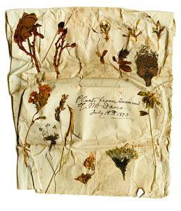 """Various specimens from John Muir's collection, photographed by Stephen J. Joseph, from """"Nature's Beloved Son: Rediscovering John Muir's Botanical Legacy"""" by Bonnie J. Gisel and Stephen J. Joseph (Heyday Books, 2009). See the slideshow below on this page for more images from the book."""