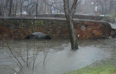 Water builds up along a bridge near Brookline Avenue in the Longwood area in Brookline. (Gabrielle Levy for WBUR)