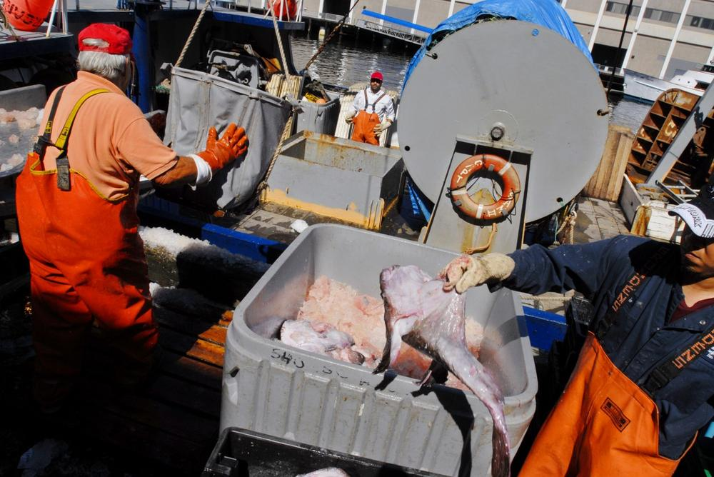 Fishermen from Bramante Seafood unload a haul of monkfish in Boston in 2006. (AP)