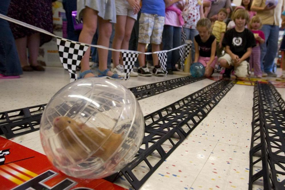 A hamster speeds across the finish line at the PETCO Hamster Races in 2007. (AP)