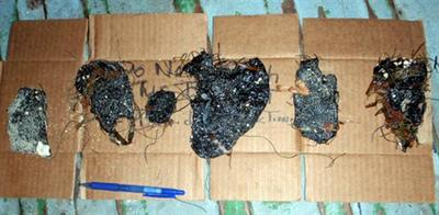 Tar balls retrieved Monday from Fort Zachary State Park in Key West, Fla., are shown in this photo provided by the U.S. Coast Guard.  (AP)