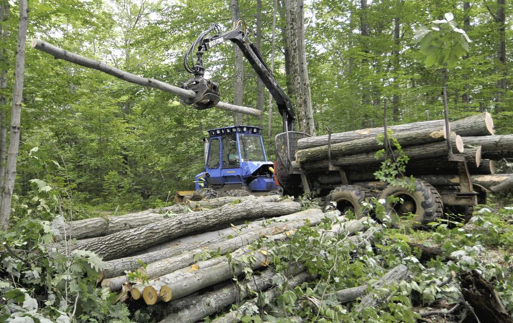 Forest products harvester Justin Gundlach uses a forwarder to offload firewood from a clearing harvest in Great Mountain Forest in Norfolk, Conn. (AP)