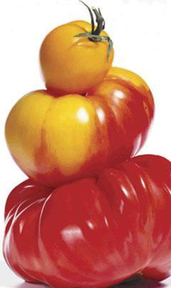 "A piece of the cover image from ""Ripe: The Search for the Perfect Tomato,"" by Arthur Allen, is shown. (AP)"