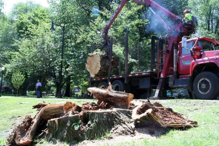 A Mack truck cleared a toppled tree in Boston's Public Garden on Monday. (Huw Roberts for WBUR)