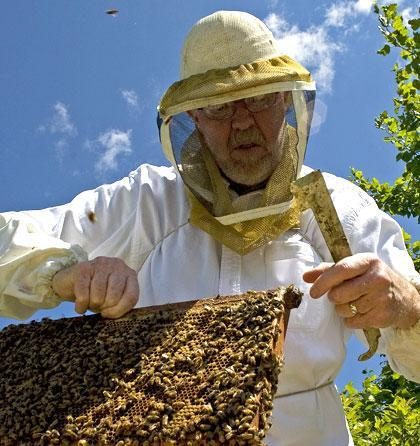 "Timothy Fulton, a self-described ""backyard beekeeper"" is seen with his bees in Kenosha, Wis. (AP)"