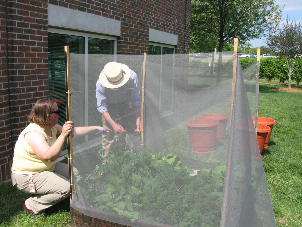 Harvard Pilgrim Health Care employees Marie Duprey and Arthur Ensroth help maintain vegetable beds at the company's Wellesley headquarters. (Sacha Pfeiffer/WBUR)