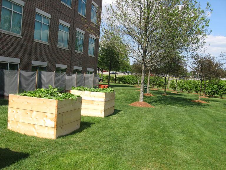 Harvard Pilgrim's corporate headquarters in Wellesley has 10 vegetable beds and four potato bins. (Sacha Pfeiffer/WBUR)