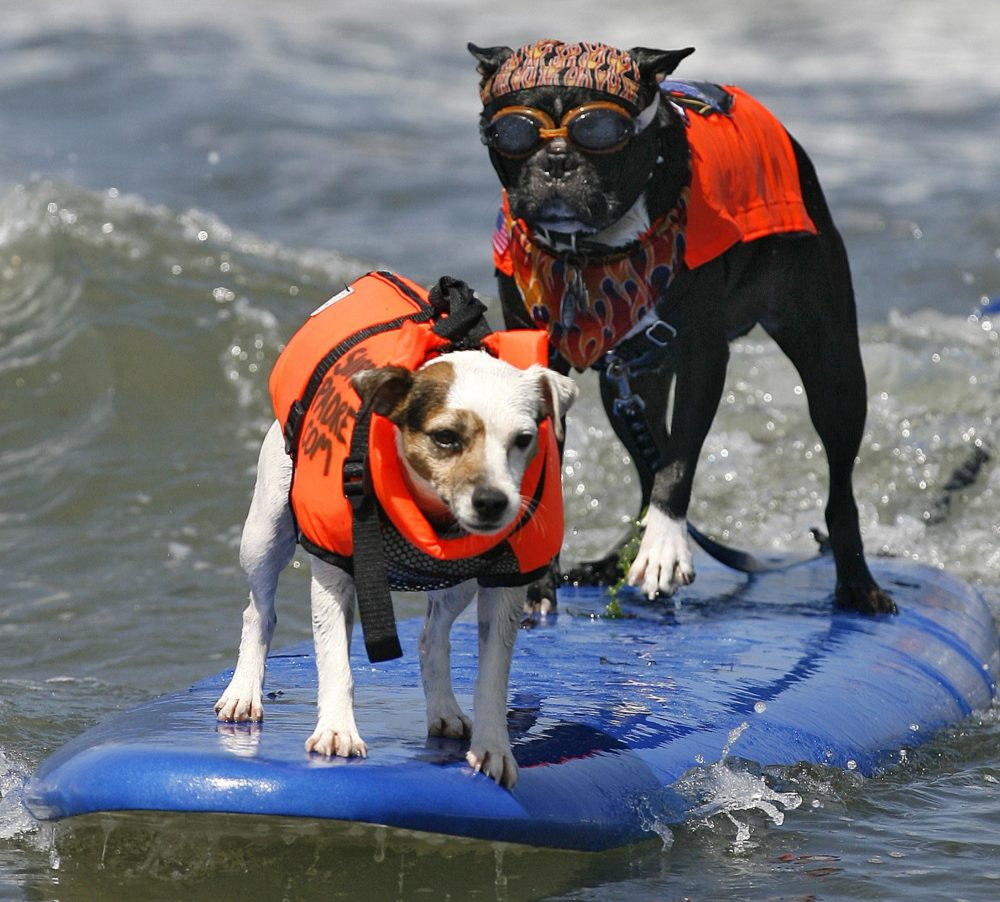 R.J., left, and Bandit the Biker Dog catch a wave at the Loews Coronado Bay Resort Surf Dog Competition in Imperial Beach, CA in 2007. The 2010 event was held on May 29. (AP Photo/Denis Poroy)