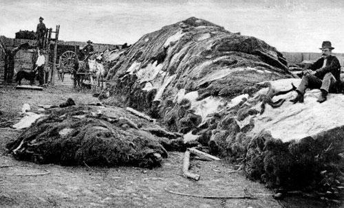 Buffalo hides in Dodge City, Kansas. Photograph April 4, 1874. (Kansas Historical Society)