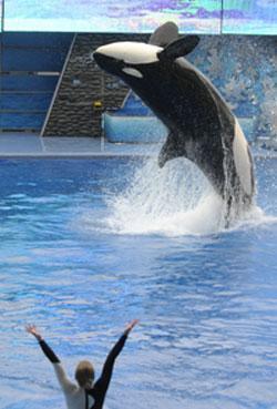 SeaWorld (AP)
