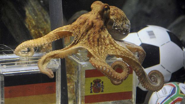 Paul The Octopus World Cup Oracle Dies Wbur News
