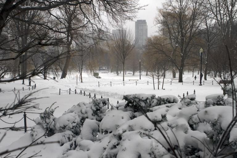 A view of Boston from the Public Garden on Monday. (Nick Dynan for WBUR)