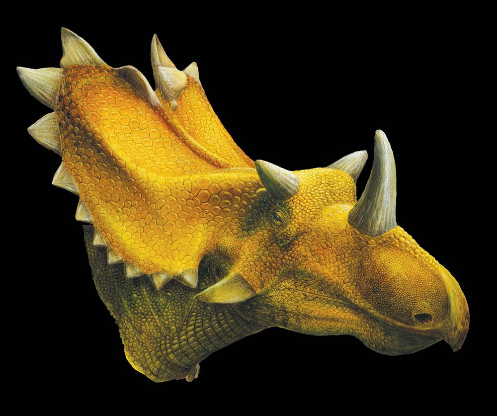 An artist's reconstruction of the Utahceratops. Scientists say they've discovered fossils in the southern Utah desert of two new dinosaur species closely related to the Triceratops, including one with 15 horns on its large head, named Utahceratops. (AP/Utah Museum of Natural History)