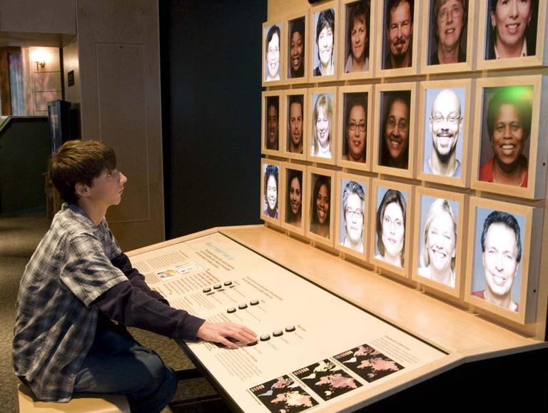 While visiting the Race: Are We So Different exhibit at the Science Museum of Minnesota, a visitor plays an interactive game about the traits people share. (American Anthropological Association and Science Museum of Minnesota/Courtesy photo)
