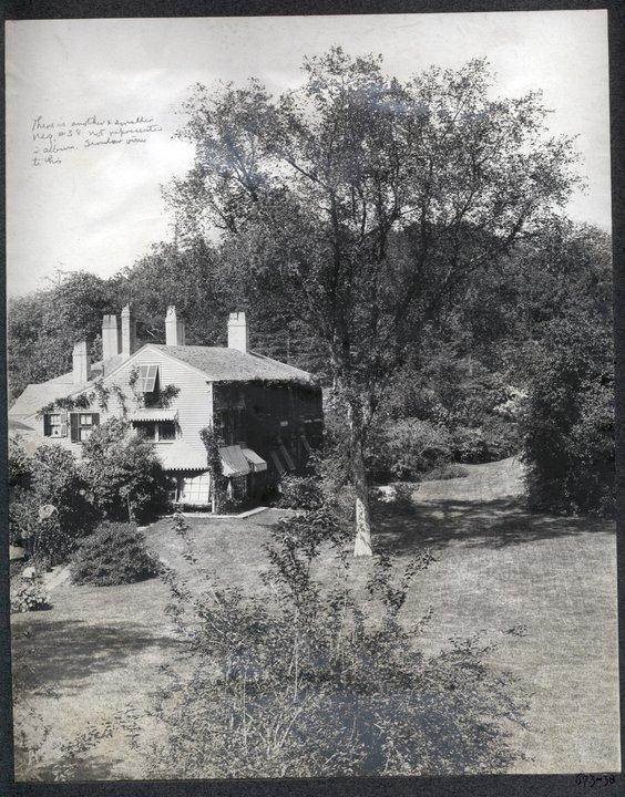 An old photo of the Olmsted Elm (Courtesy of the National Park Service/Frederick Law Olmsted National Historic Site)
