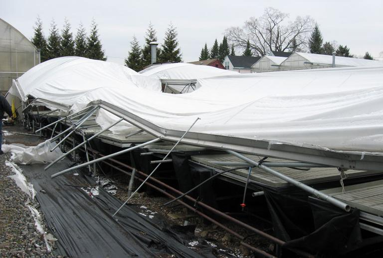 The collapsed greenhouse at Belkin Family Lookout Farm in Natick (Sacha Pfeiffer/WBUR)