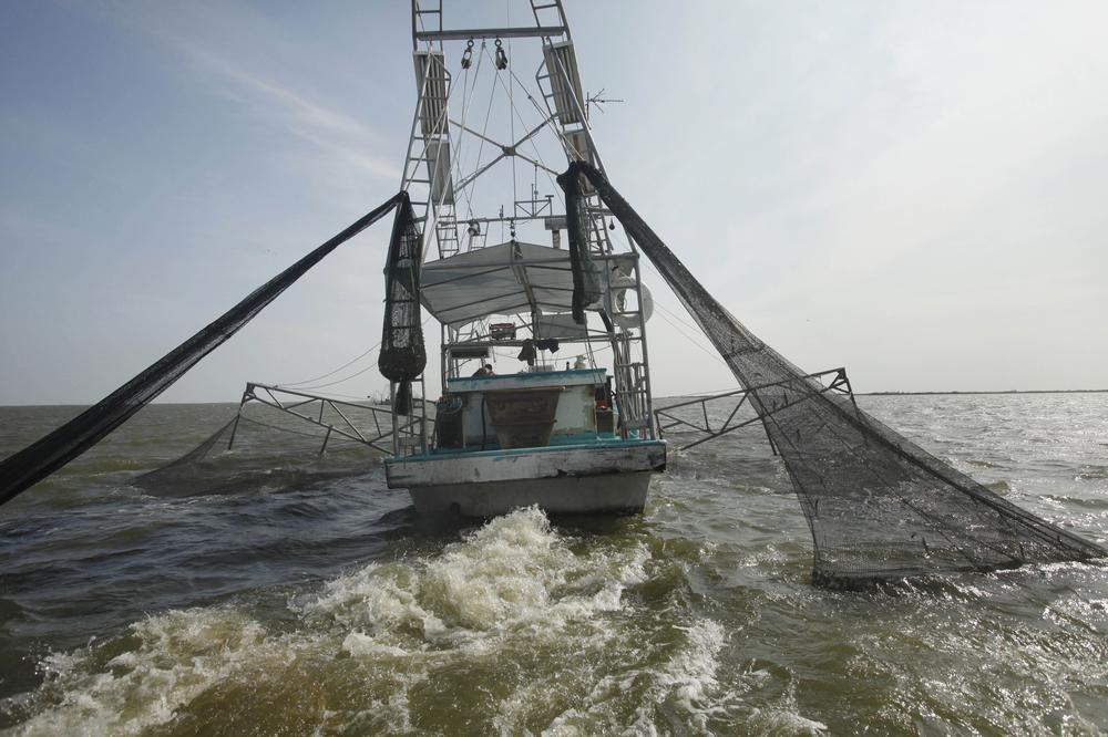 Shrimpers haul in their catch in Bastian Bay, near Empire, La., in 2010 on the first day of the shrimping season since the Deepwater Horizon oil spill. (AP)