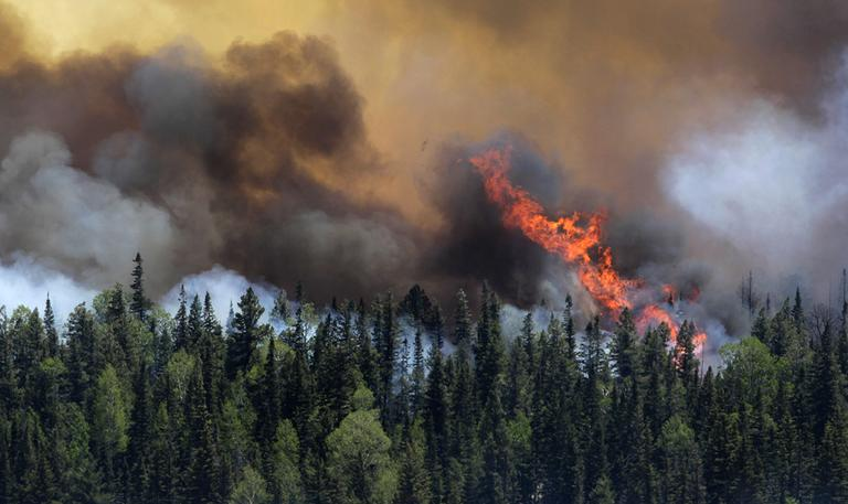 Trees as firefighters battle the Wallow Fire in the Apache-Sitgreaves National Forest, Arizona. (AP)