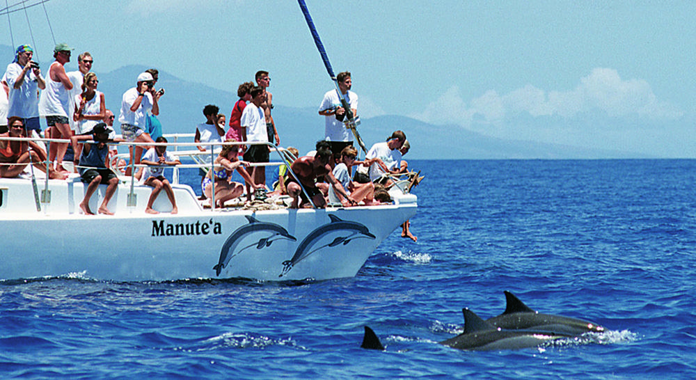 Passengers observe spinner dolphins on the foundation's Wild Dolphin & Snorkel Eco-adventure boat, off Hawaii near Maui. (AP)