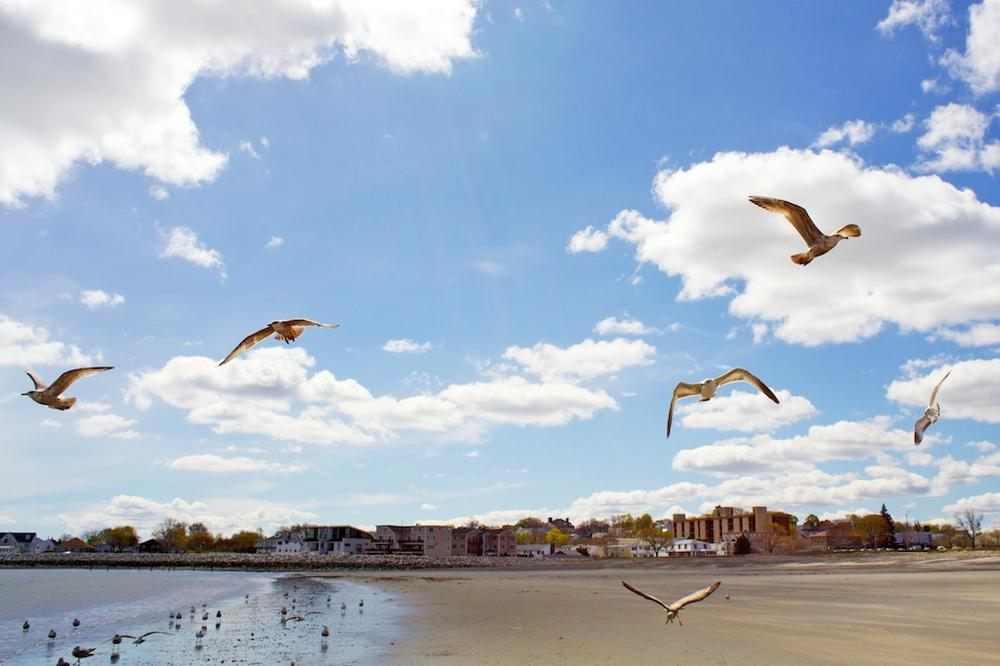 Seagulls fly above Revere Beach. (Dr. RawheaD/Flickr)