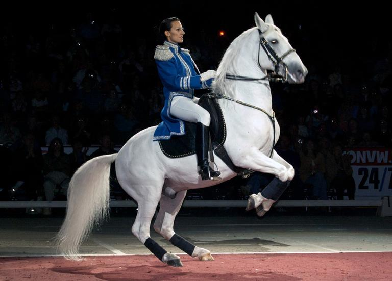A Lippizaner Stallion and a rider perform at the Wachovia Center in Philadelphia, Pa., in 2008. (misscrabette/Flickr)