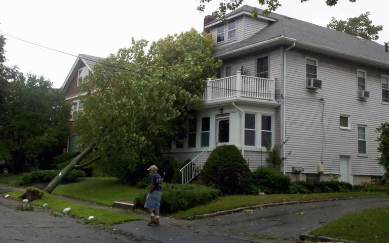A tree rests on a house on Chester Street in Belmont. (Jesse Costa/WBUR)