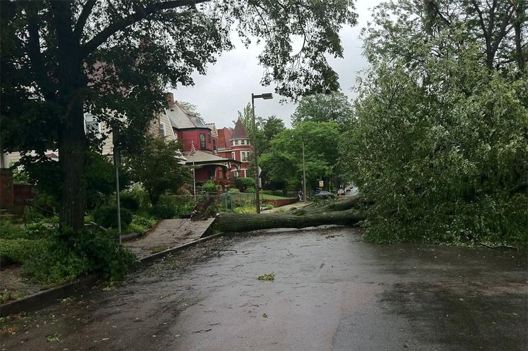 A downed tree on Melville Avenue in Dorchester (Delores Handy/WBUR)