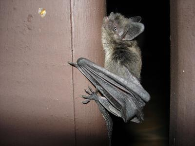 A bat found in the Back Bay tested positive for rabies, health officials said.