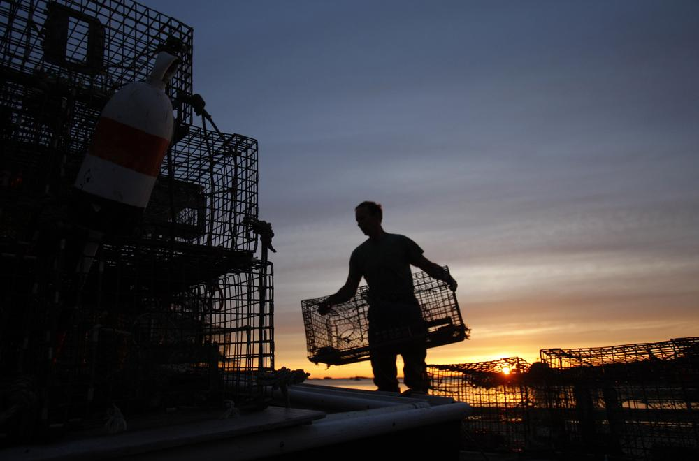 Maine lobsterman stacking traps at dawn. (AP)