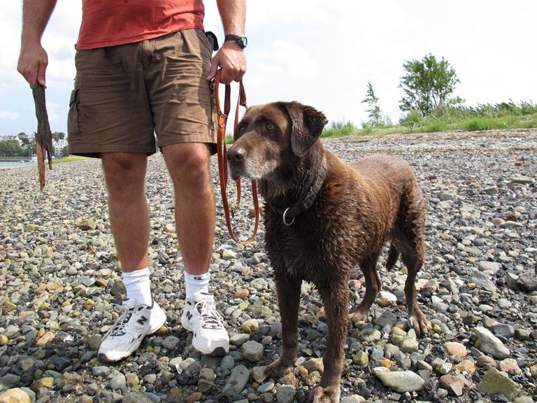 Moxie, 13, next to her owner, Mark Aliberti, in Winthrop's Coughlin Park (Kathleen McNerney/WBUR)